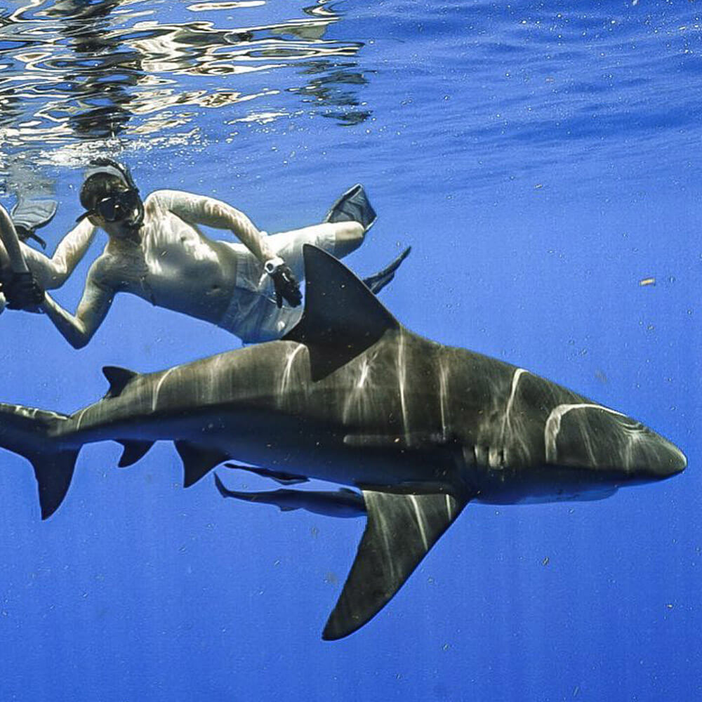 An image of divers in the water with sharks off the coast of Florida.