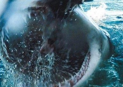 An image of a shark's open mouth on the surface of the ocean on a miami shark tour.