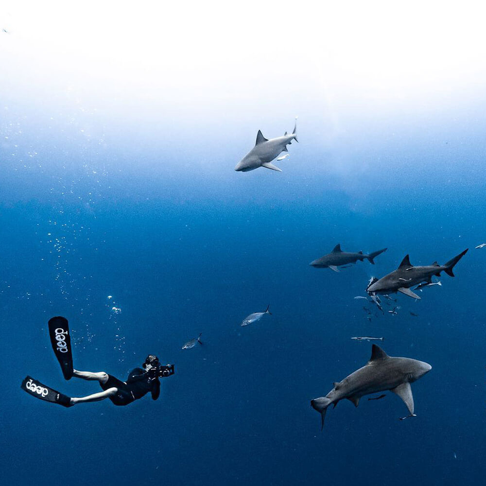 An image of a cameraman and a group of sharks underwater on a florida shark tour.